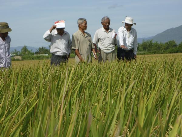Hội thảo đầu bờ tại tỉnh Ninh Thuận 28/08/2009