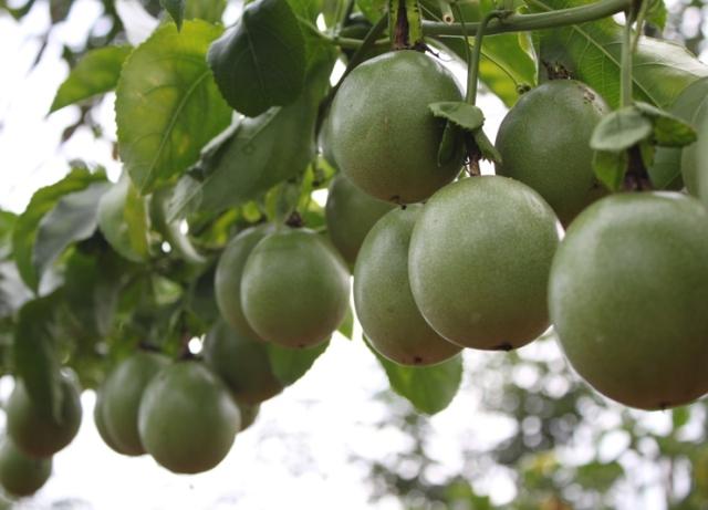 Ảnh hưởng của trung vi lượng đến chất lượng nông sản