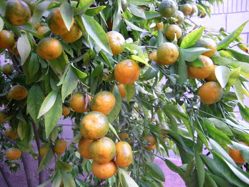 Nguyên tắc 4 đúng trong việc cung cấp thứ ăn cho cây trồng