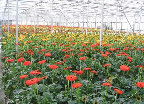 Vita plant 999 với vùng trồng rau và hoa trong mùa mưa