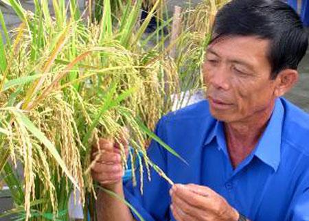 Lúa và phân (ZOOREA)