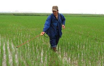 Nông dân thế hệ mới, trồng lúa giống, thay đổi cách bón phân, tăng hiệu quả kinh tế
