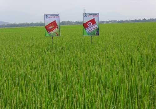 Nông Phú 666 giúp nhà nông làm giàu