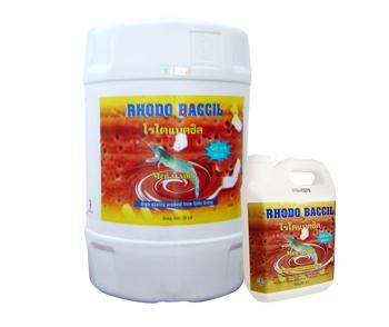 Rhodo Baccil